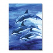 Dolphin Drawing Book