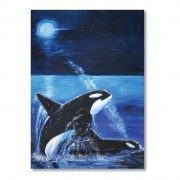 Orca Drawing Book