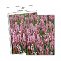 Tall Flowers Cards/Envs