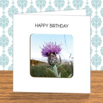 Thistle Coaster Card 1