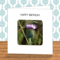Thistle Coaster Card 7