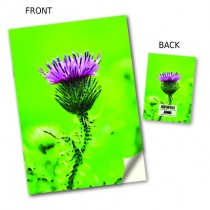 Thistle on Green Notebook
