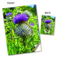 Coloured Thistle Notebook