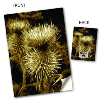 Thistle View Notebook